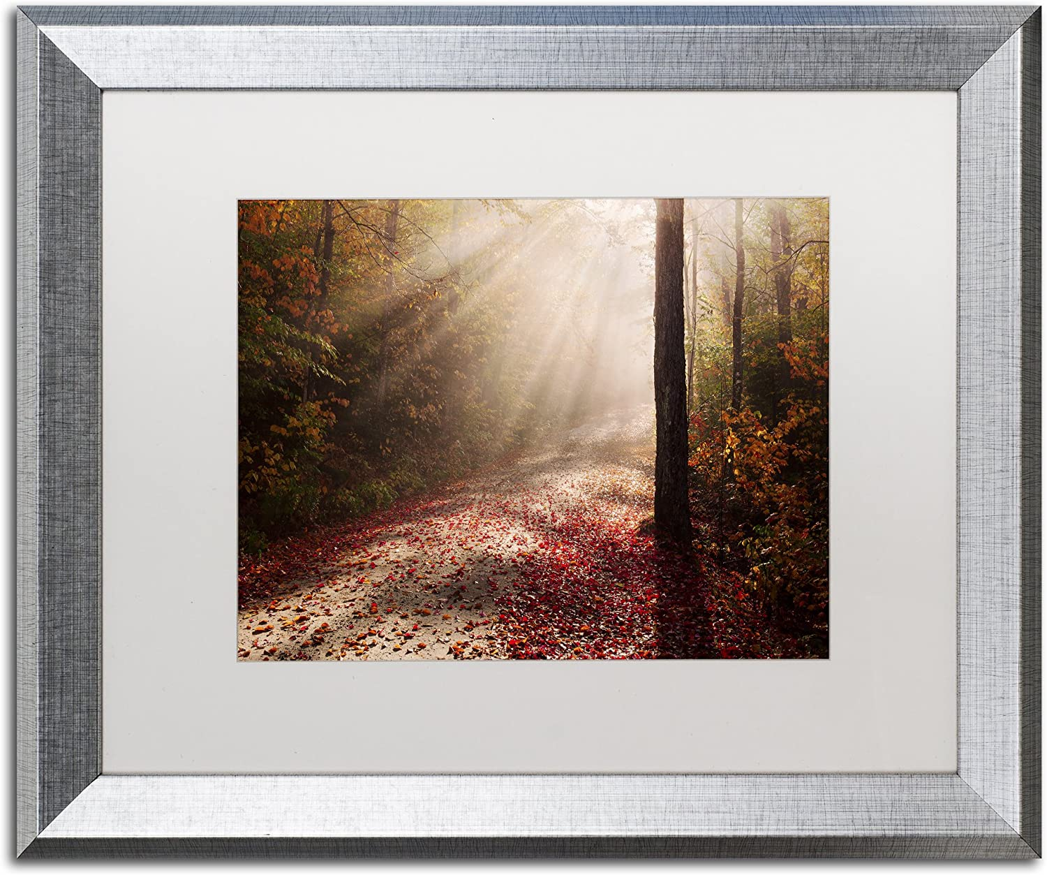 Amazon Com Light In The Forest By Michael Blanchette Photography White Matte Silver Framed Artwork 16 X 20 Home Kitchen