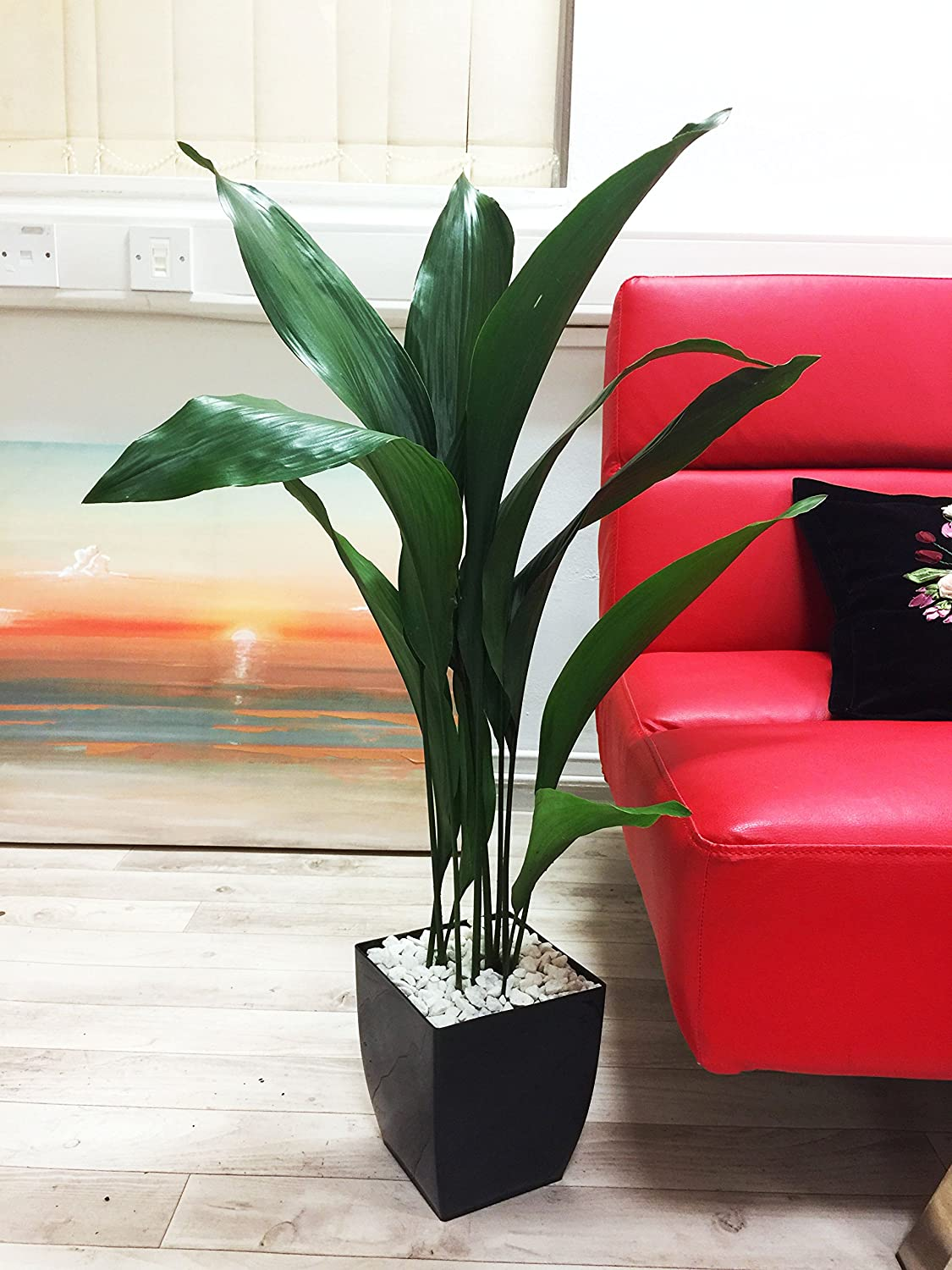 Easy Plants® Large Cast Iron Plant Common Aspidistra Table Plant @ Gloss Black Milano Square Pot