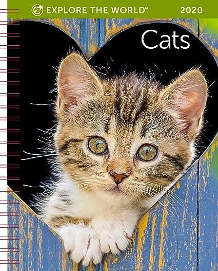 Amazon.com: Calendario de compromiso semanal de gatos 2020 ...