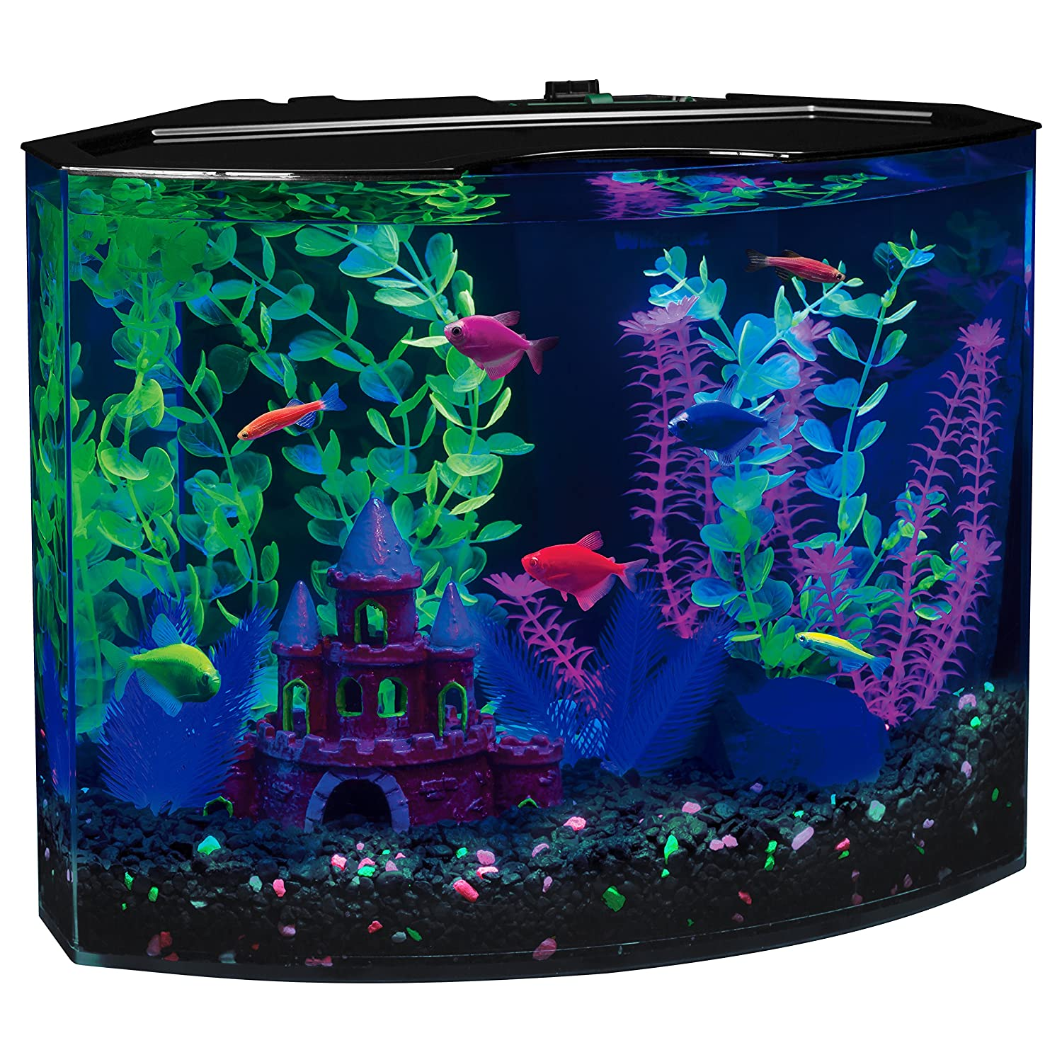 Aquarium fish 5 gallon tank - Amazon Com Glofish 29045 Aquarium Kit With Blue Led Light 5 Gallon Aquarium Starter Kits Pet Supplies