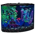5 gallon aquarium kit for Glofish tank setup