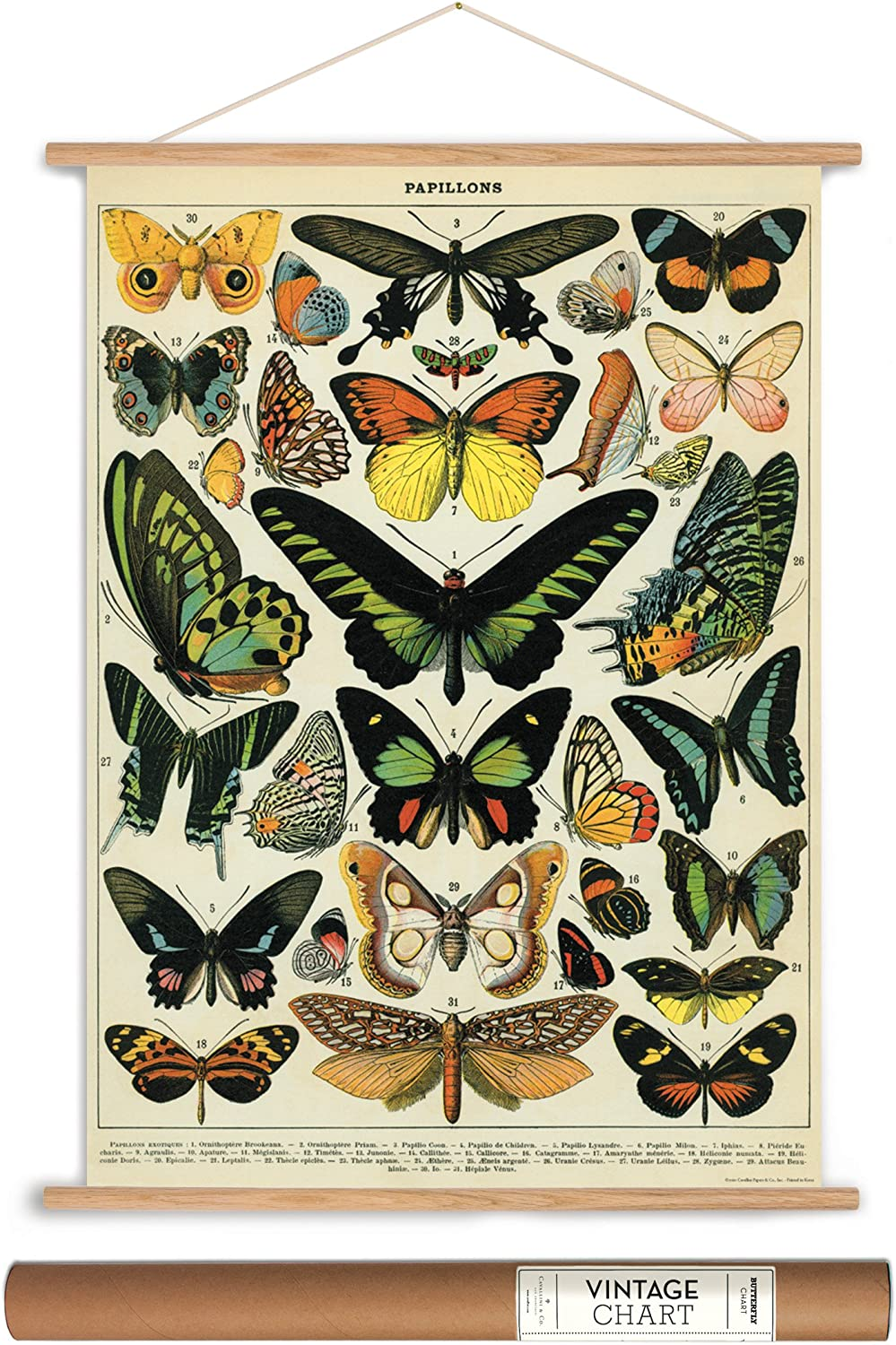 Amazon.com: Cavallini Papers Mariposas estilo clásico ...