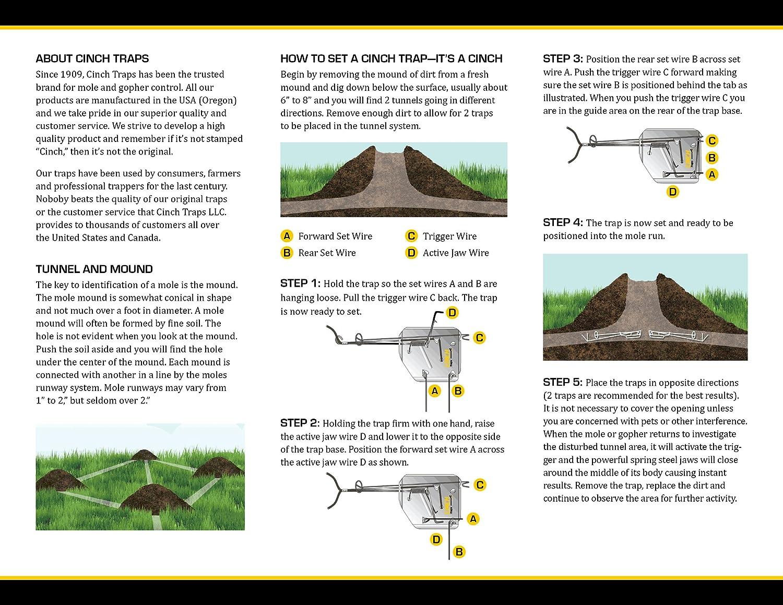 amazon com cinch traps medium mole trap kit two mole traps with