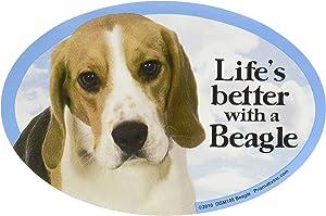 Cat & Dog Magnets-Beagle