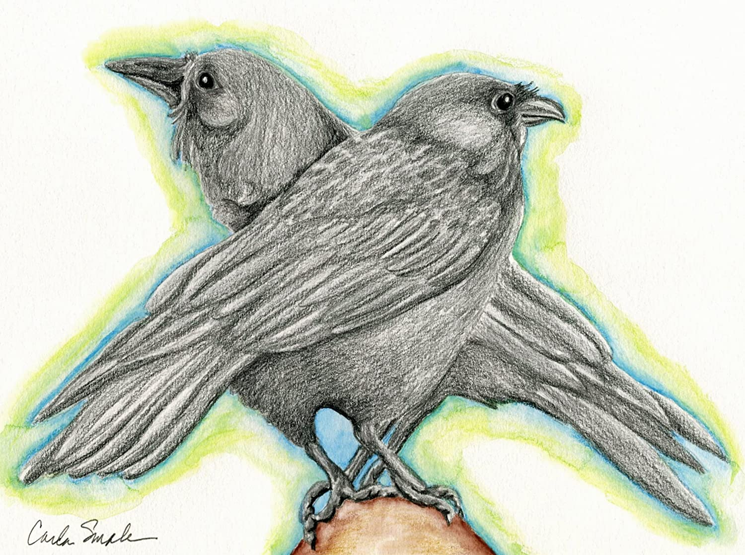 Amazon com raven crow bird wildlife original pencil drawing carla