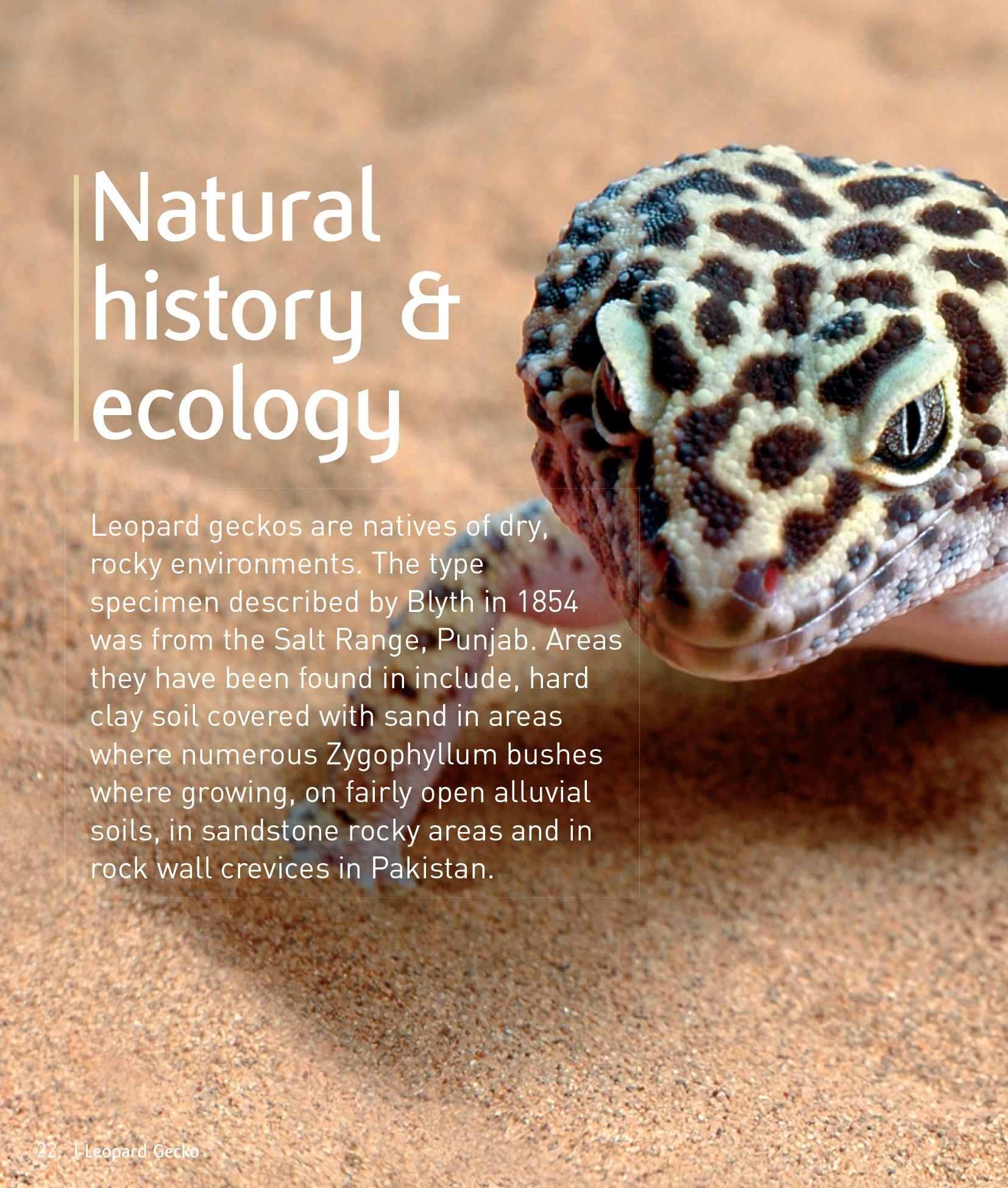 Leopard gecko pet expert understanding and caring for your pet leopard gecko pet expert understanding and caring for your pet amazon lance jepson 9781907337178 books nvjuhfo Images
