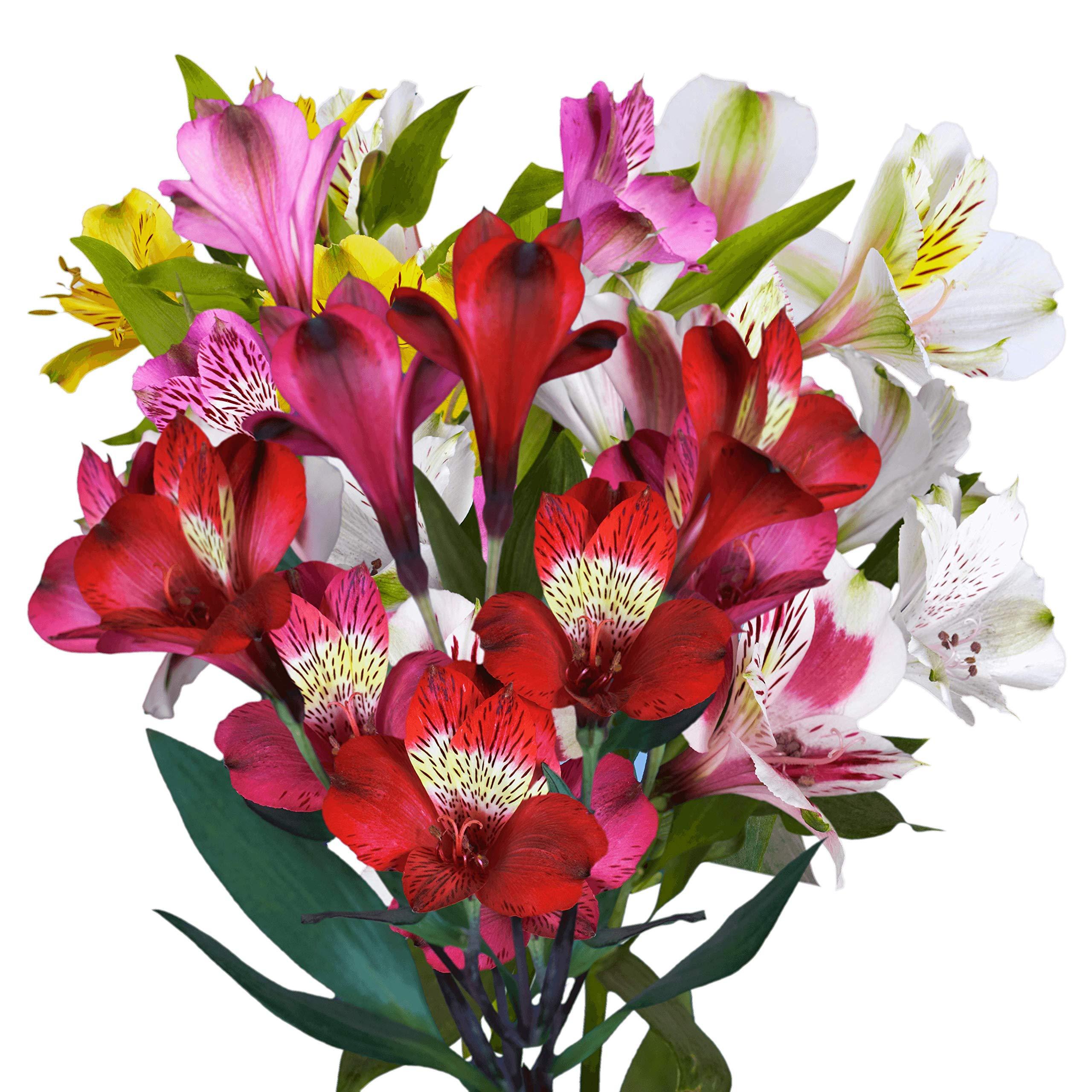 GlobalRose 100 Fresh Cut Assorted Alstroemeria Flowers - Fancy Alstroemeria - Fresh Flowers For Birthdays, Weddings or Anniversary.