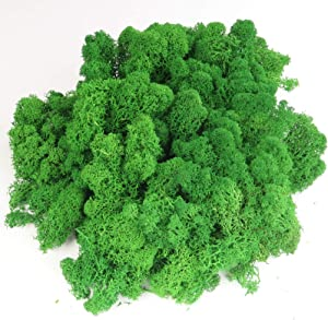 GOVINA Moss Preserved Reindeer Floral Natural Decorative Moss for Fairy Gardens, Terrariums, Wedding Dressing Potted Plants Any Craft or Floral Project (Grass Green 3oz)