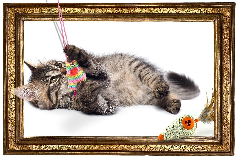 Pets :: Cute Baby Tabby Kitten (Copy)