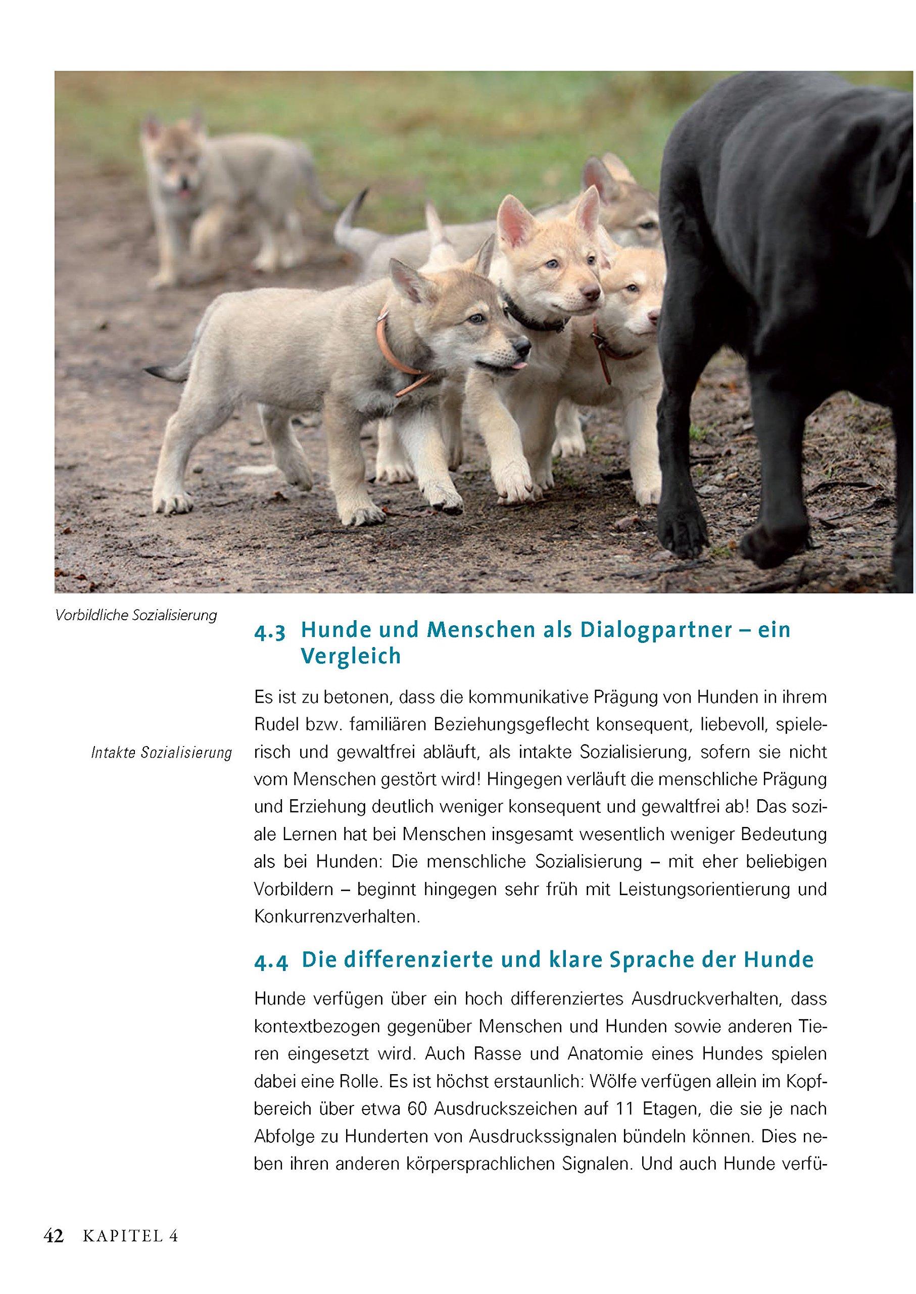 Mit den Augen der Hunde: So denken und kommunizieren Hunde: Amazon ...