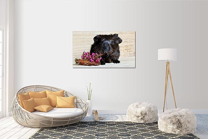 120 x 70 cm Wandtattoo Wandsticker Aufkleber Meerschweinchen Grösse