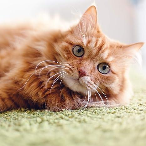 Relaxdays rascador para Gatos de cartón Rectangular con Hierba gatera, marrón, 4 x 45,5 x 23,5 cm: Amazon.es: Hogar