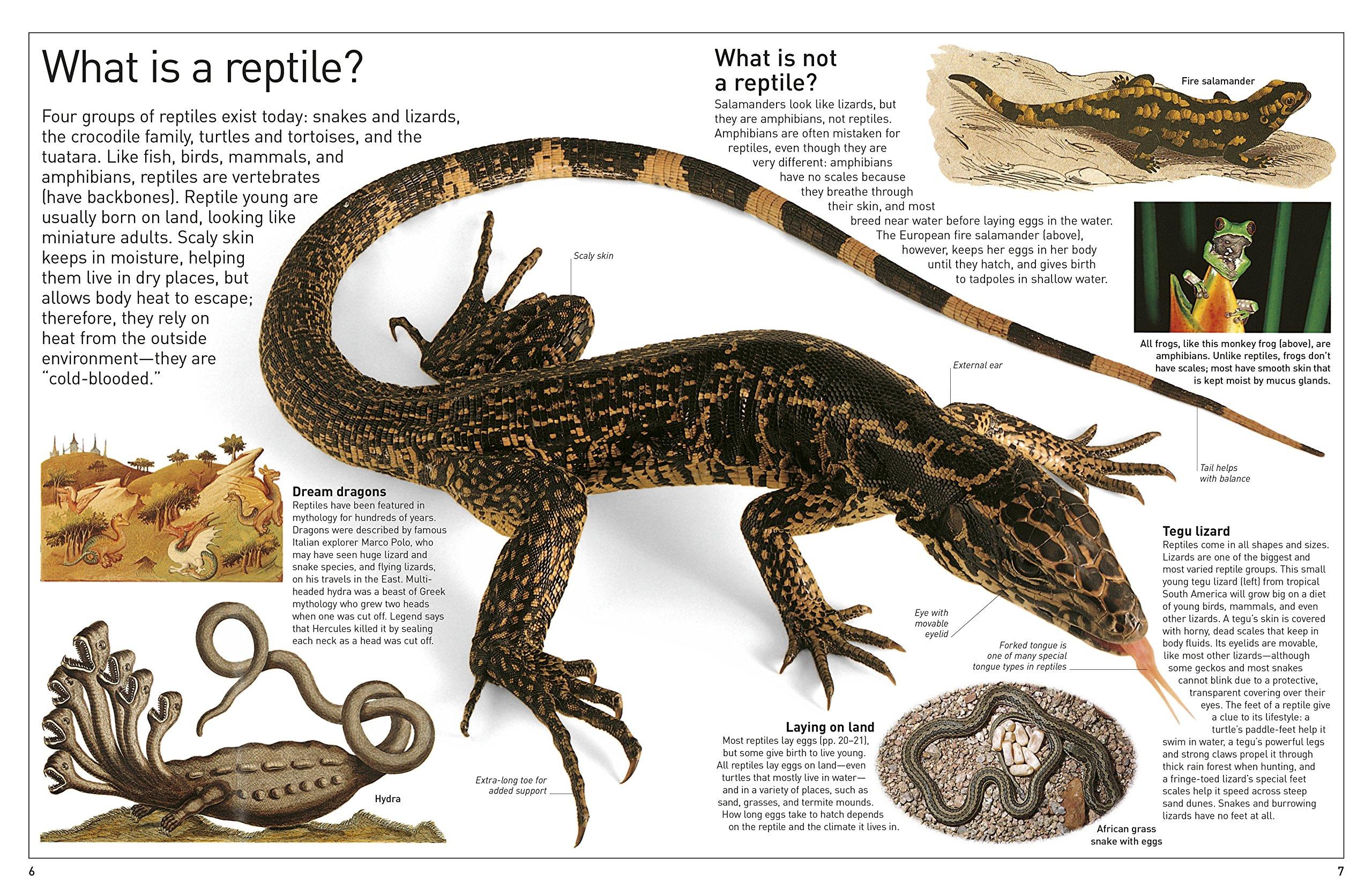 dk eyewitness books reptile dk 9781465462497 amazon com books