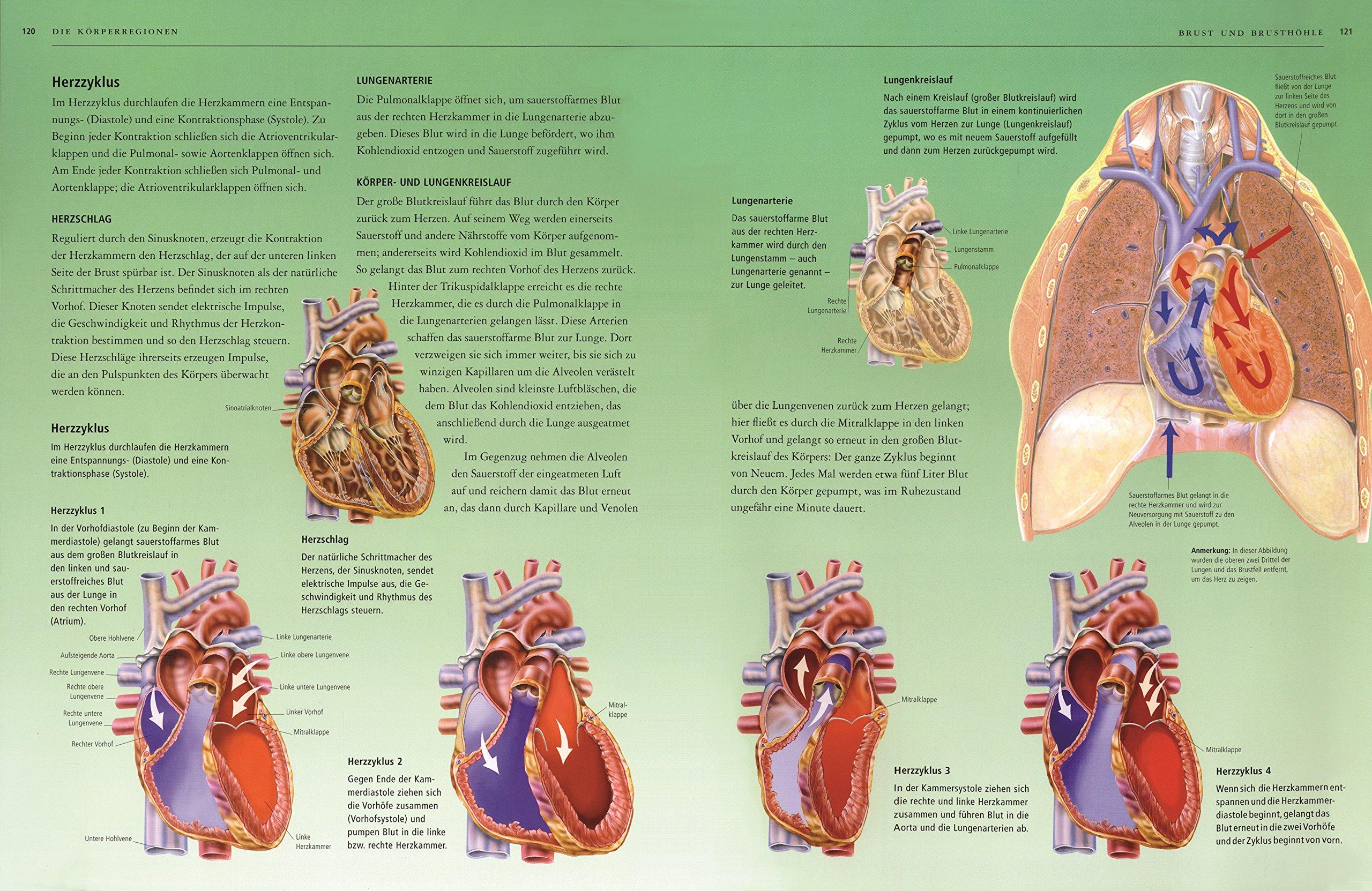 Atlas des menschlichen Körpers: Bau und Funktion des menschlichen ...