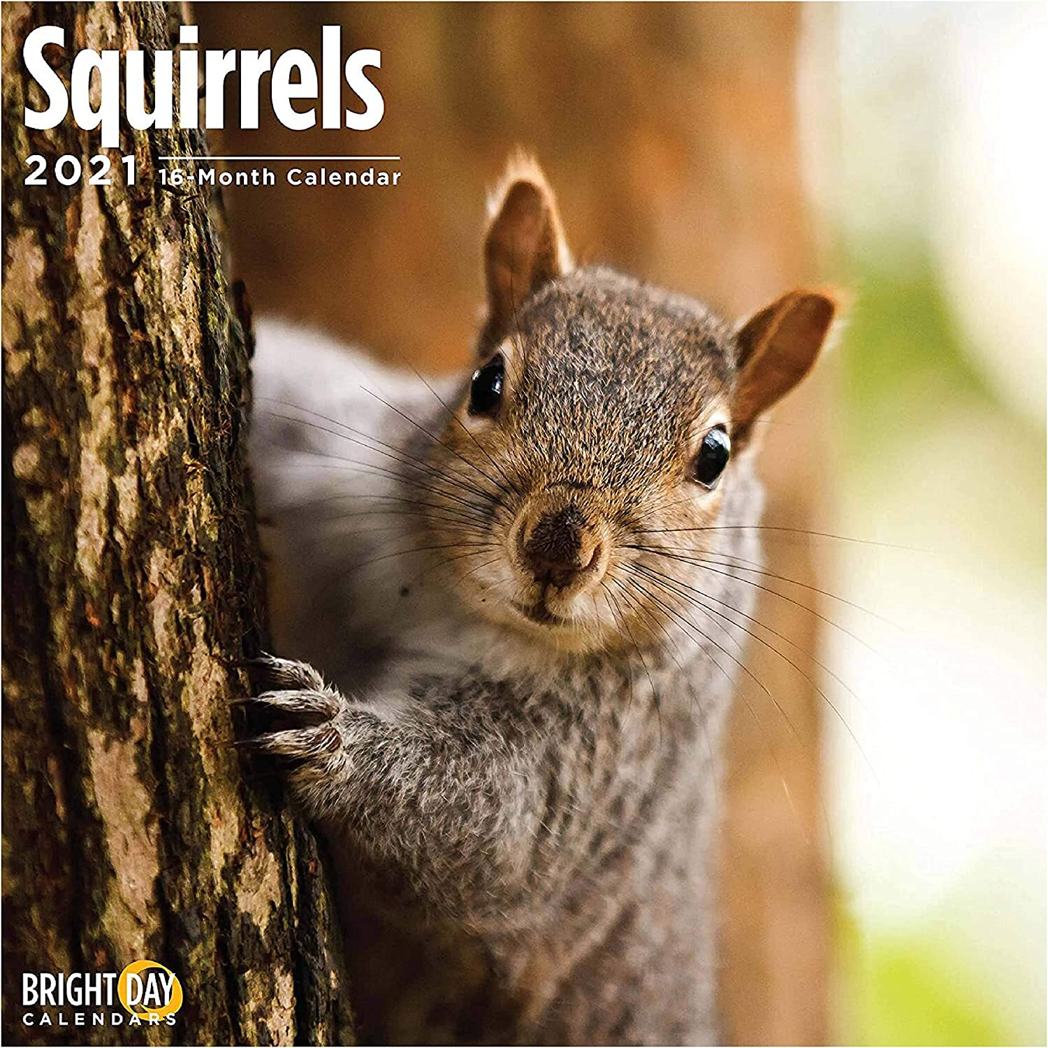 Amazon.com: 2021 Squirrels Wall Calendar by Bright Day, 12 x 12