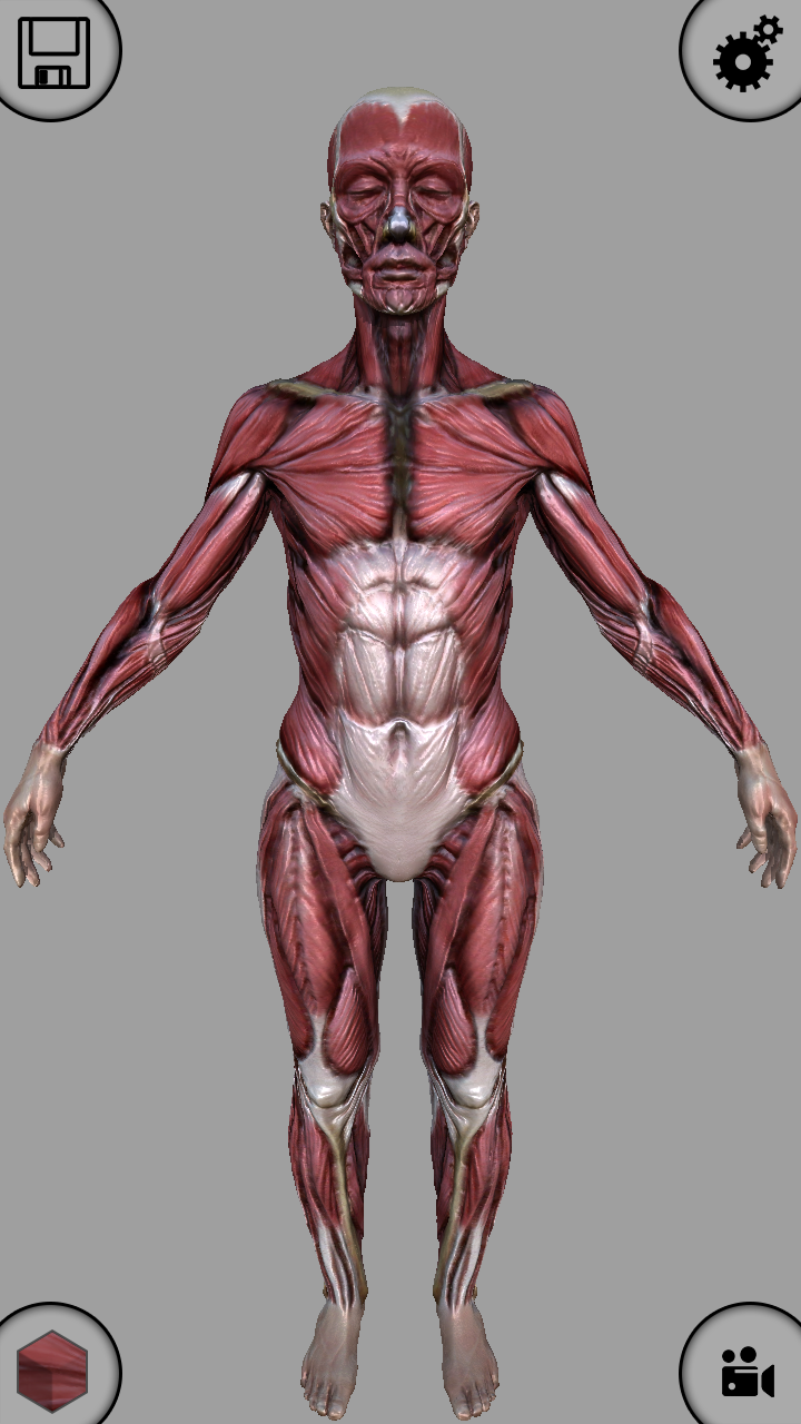 Amazon.com: MARA3D Human Anatomy Lite: Appstore for Android