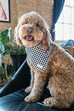 Lucy & Co  Dog Bandana - Designer Puppy Accessory for Boy and Girl Dogs -  Includes 1 Limited Edition Print Bandana