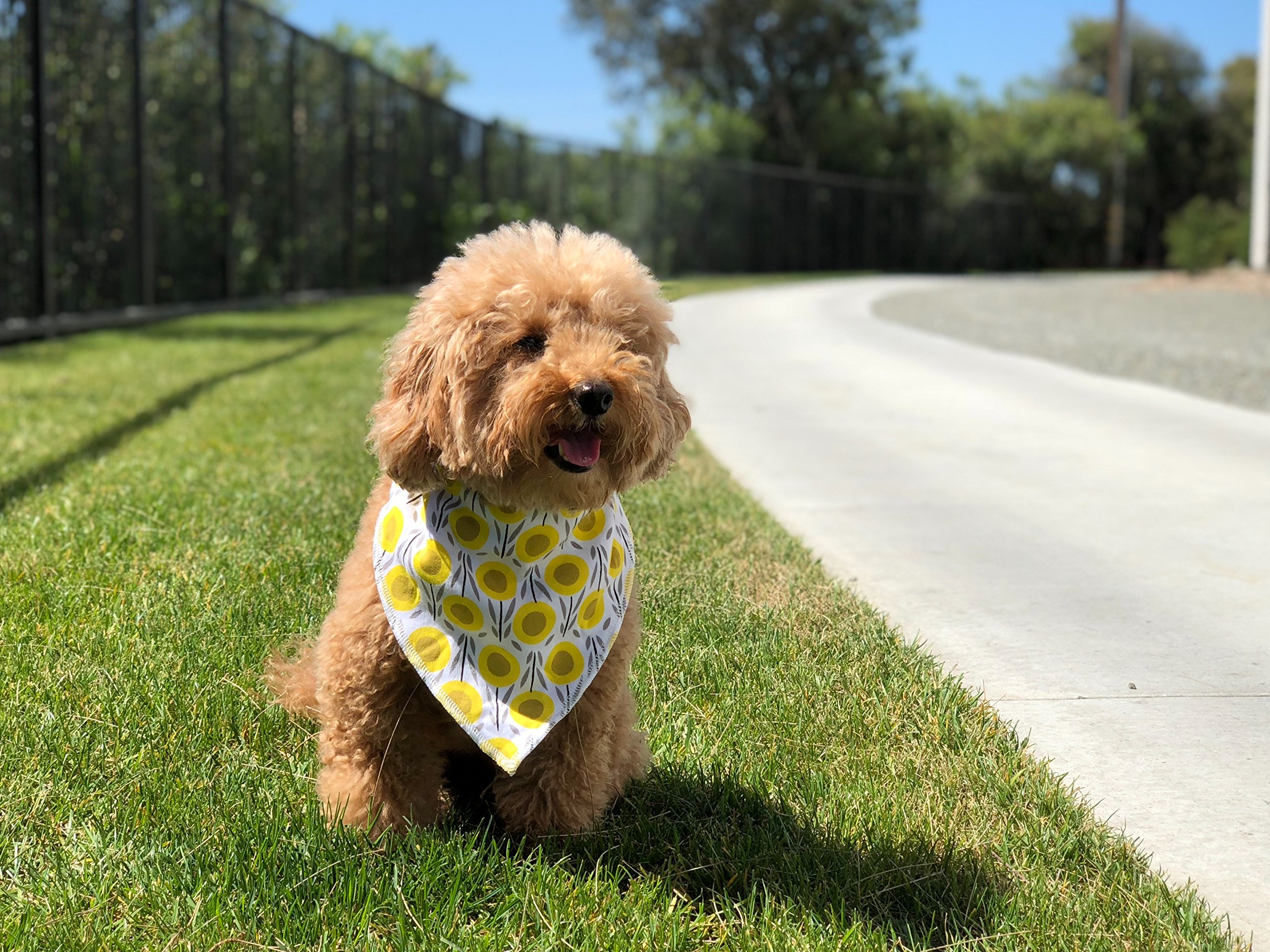 Paws n' Play 4 Piece Fun Bright Color Snap-On Pet Dog Bandana Triangle Scarf Bibs - Accessories for Dogs, Puppy, Cats - Small/Medium, Soft Cotton (Dewshine Poppy) by Paws n' Play (Image #7)