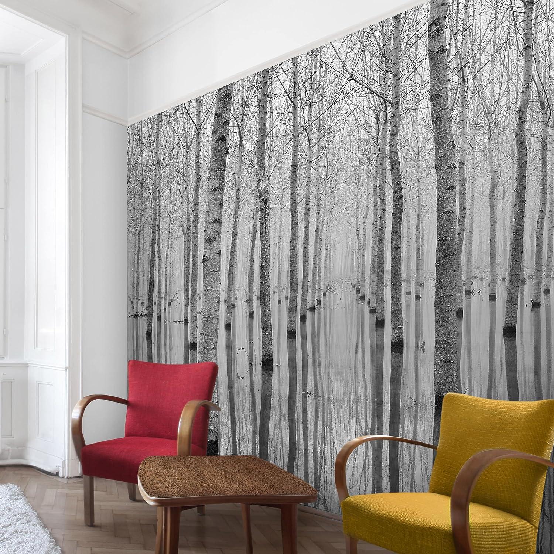 Fototapete Wald - Birken HxB im November - Vlies Quadrat, Größe HxB Birken  192cm x 192cm 5e3e38