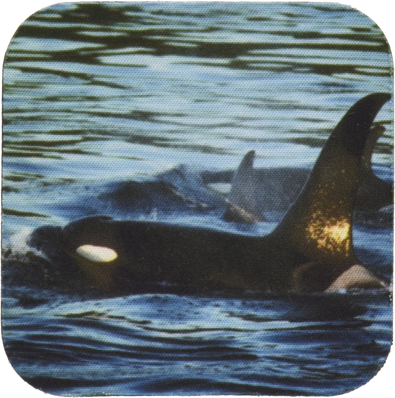3dRose CST_96454_1 Killer Whales Or Orca, San Juan Islands, Washington-Us48 Ksc0024-Kevin Schafer-Soft Coasters, Set of 4