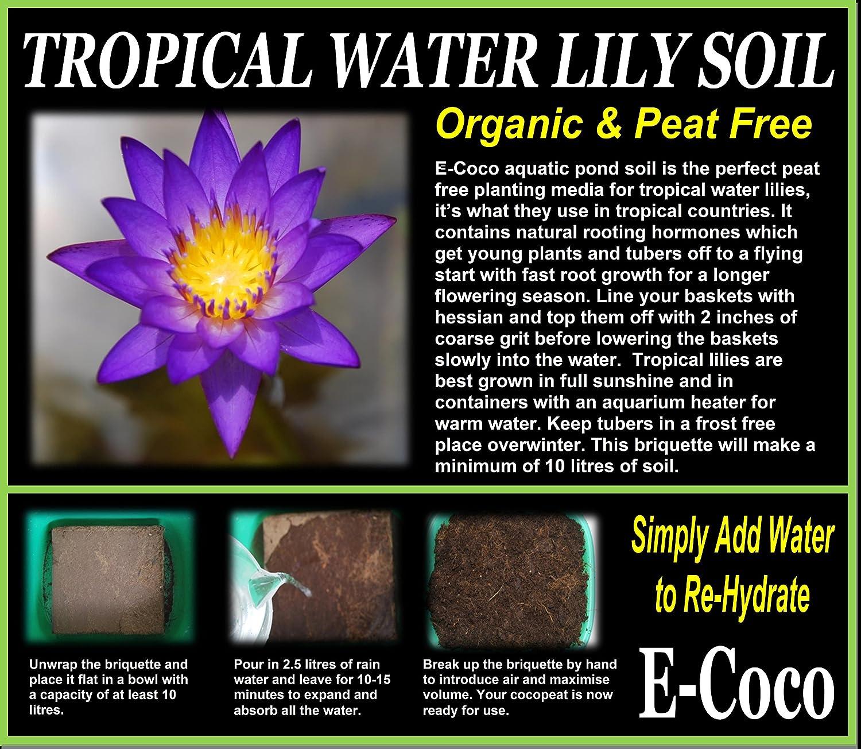 Aquatic Pond Soil, Aquatic Compost for Tropical Water Lilies, Tropical Pond Soil BRIQUETTES (10 litres) E-Coco Products UK