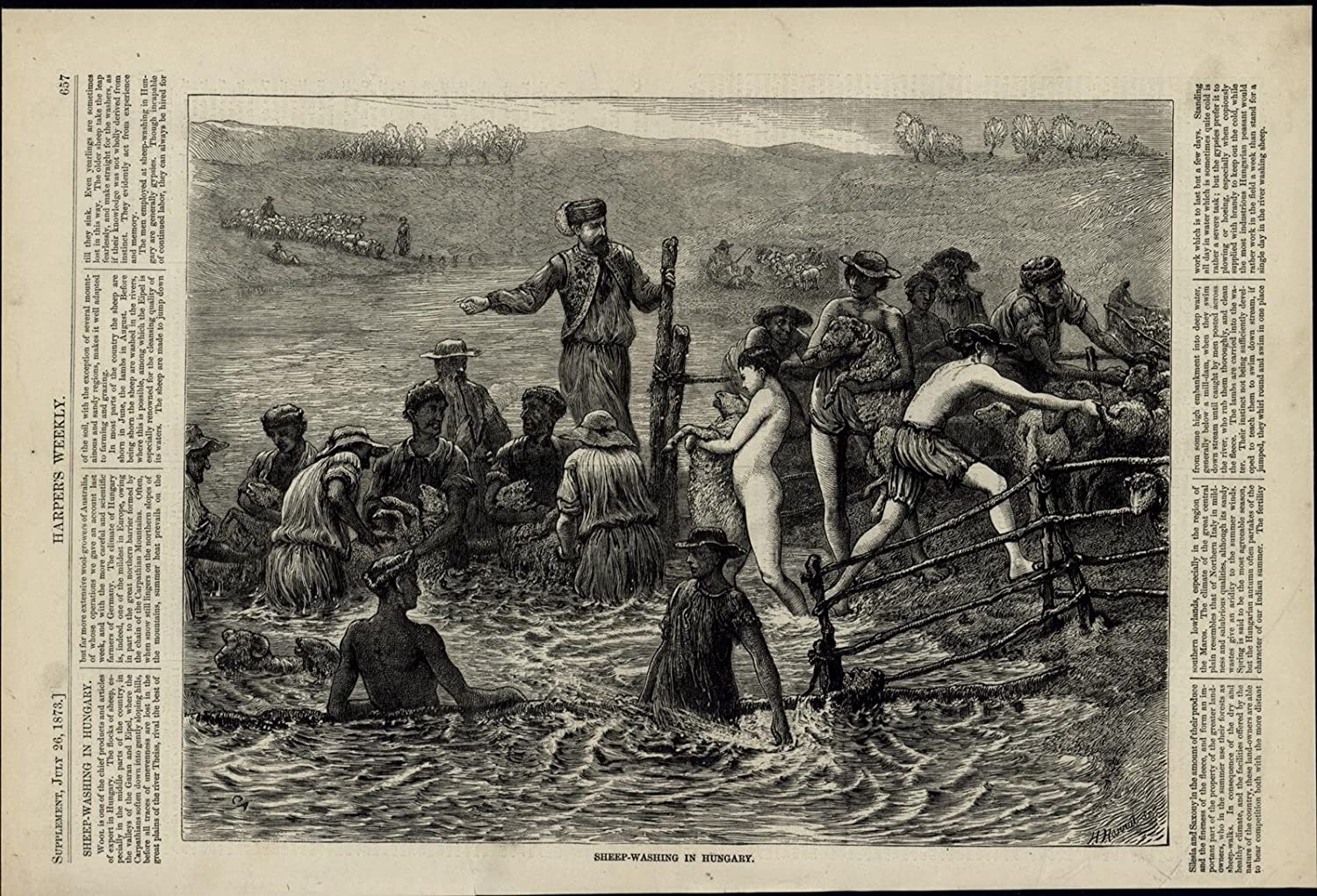 Amazon Com Sheep Washing In Hungary Wool Farming Livestock 1873 Great Old Print For Display Entertainment Collectibles