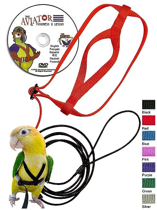 Bird Supplies Pettorina Per Pappagalli Un Nuovo Modo Di Volare