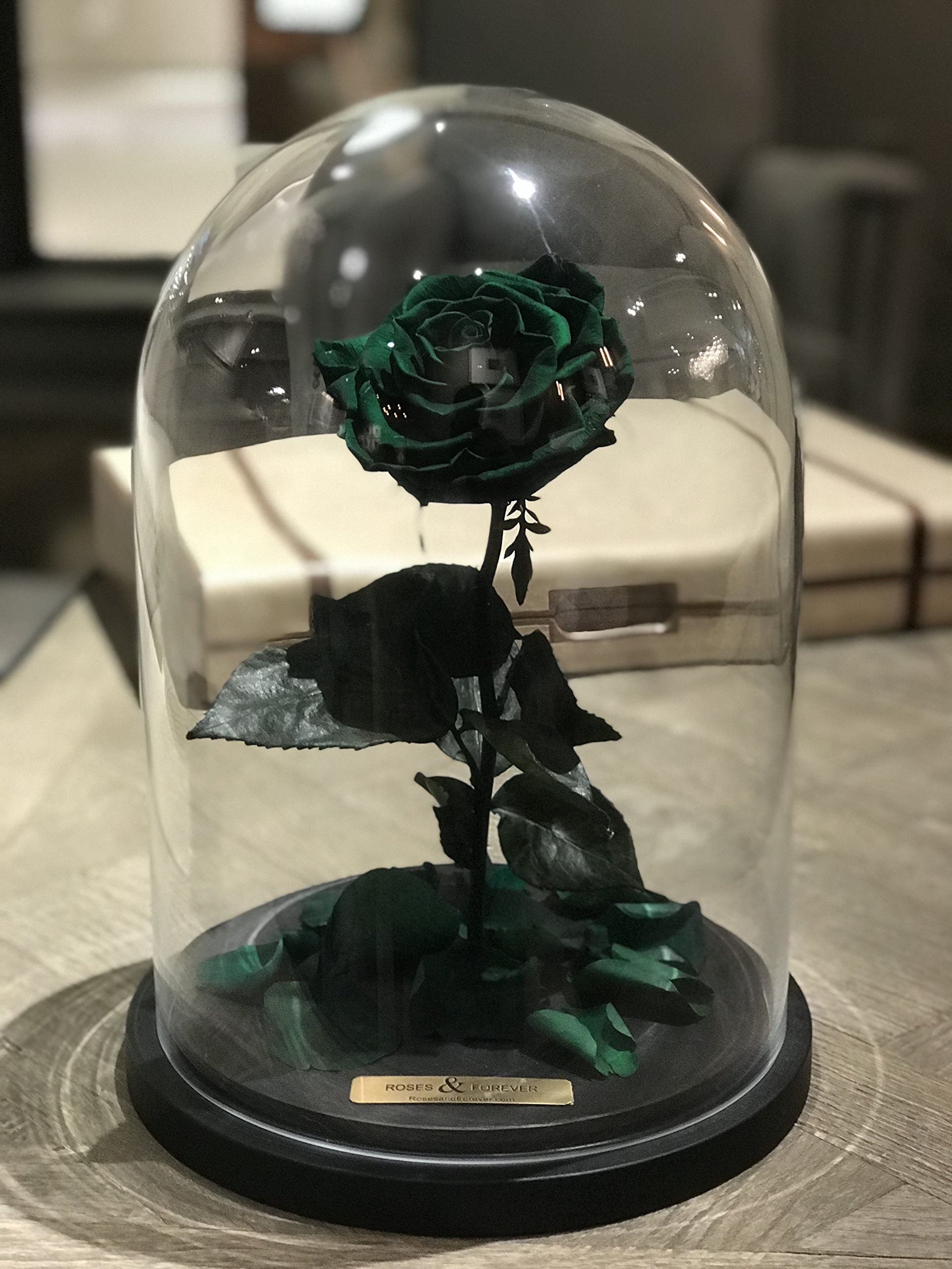 Bella Rose (Forest Green) Fresh Cut Preserved Rose in Glass Cloche. SHE WILL LOVE IT - World's Longest Lasting Roses by Roses & Forever LLC (Image #2)
