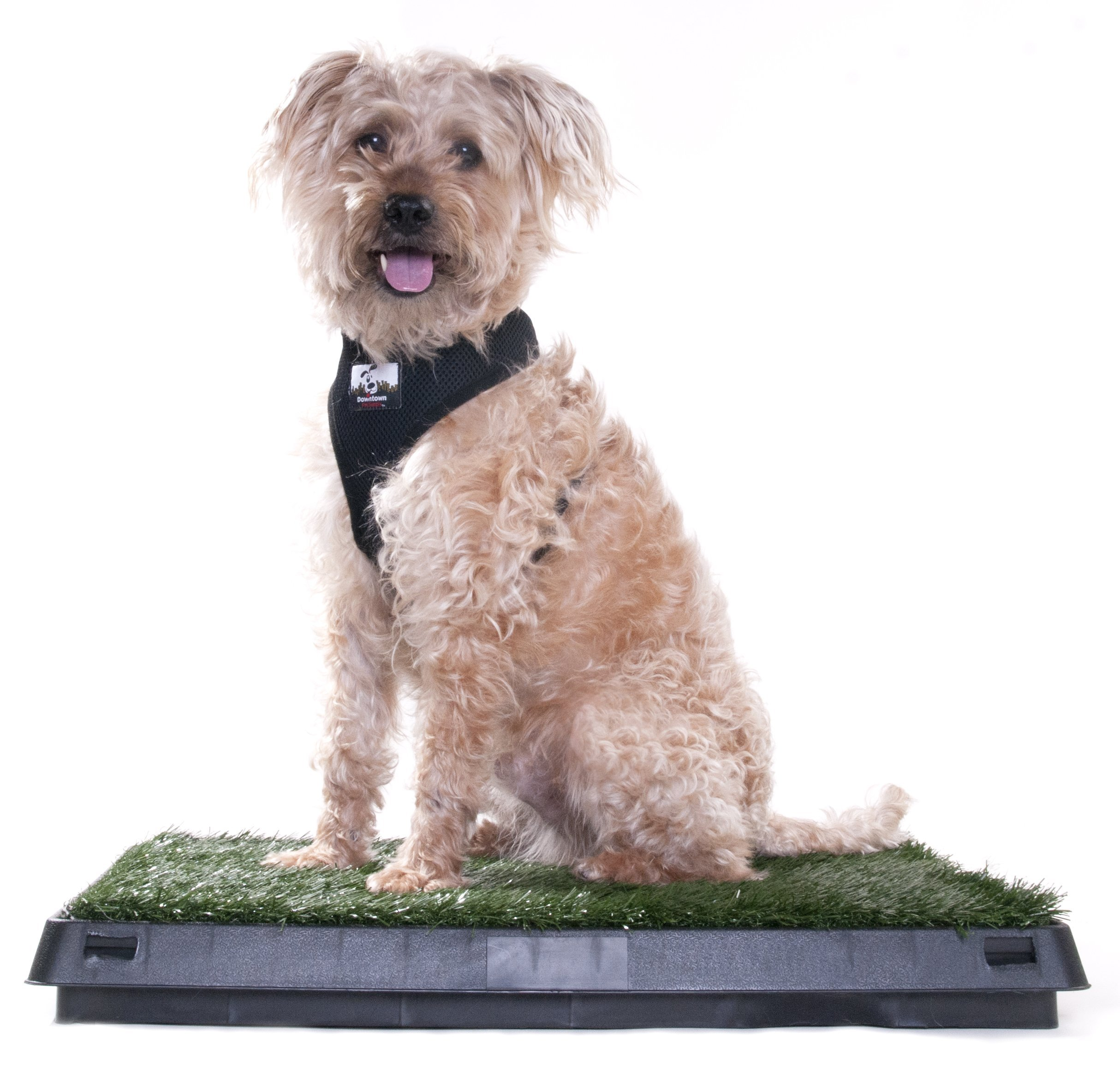Downtown Pet Supply Dog Pee Potty Pad, Bathroom Tinkle Artificial Grass Turf, Portable Potty Trainer (20 x 25 inches with Drawer) by Downtown Pet Supply (Image #7)