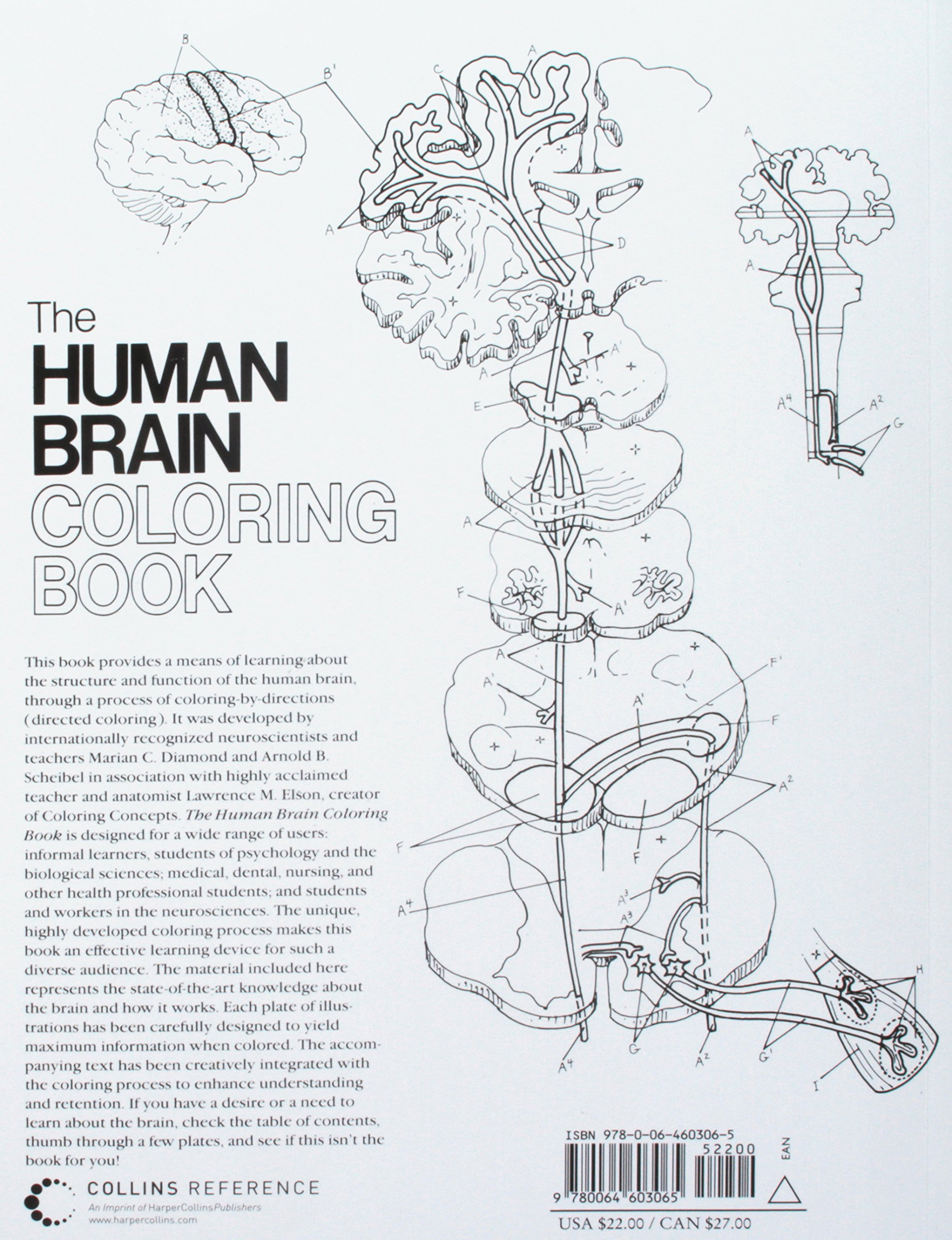 The Human Brain Coloring Book Coloring Concepts Amazon Co Uk Diamond Marian C Scheibel Arnold B Books