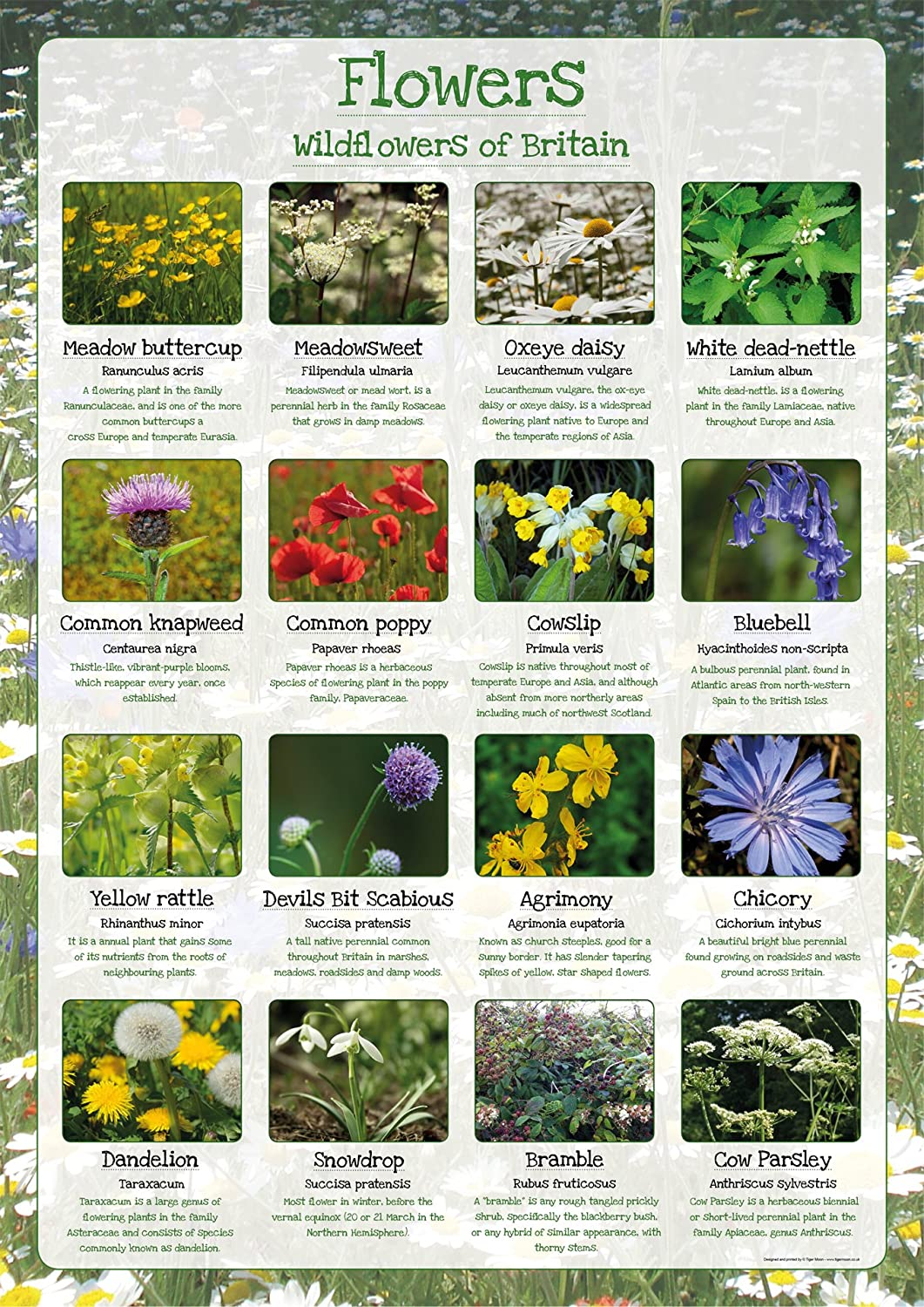 Wildflowers Of Britain Paper Laminated Poster A2 Amazon