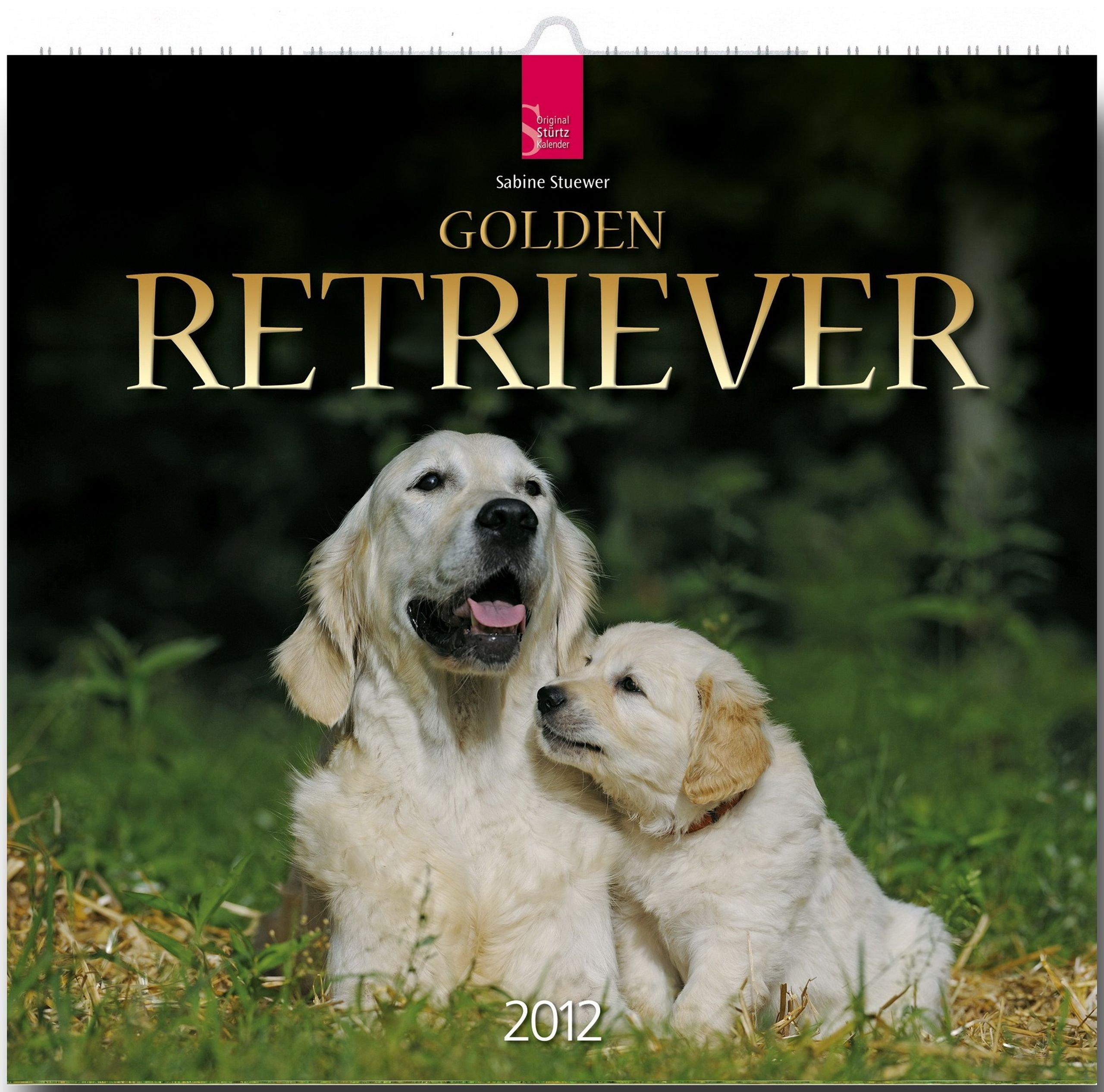 Golden Retriever 2012
