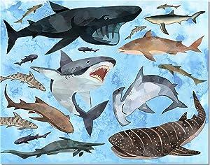 Shark Decor Wall Art - Kids Bedroom Bathroom Print - 11x14 - Unframed