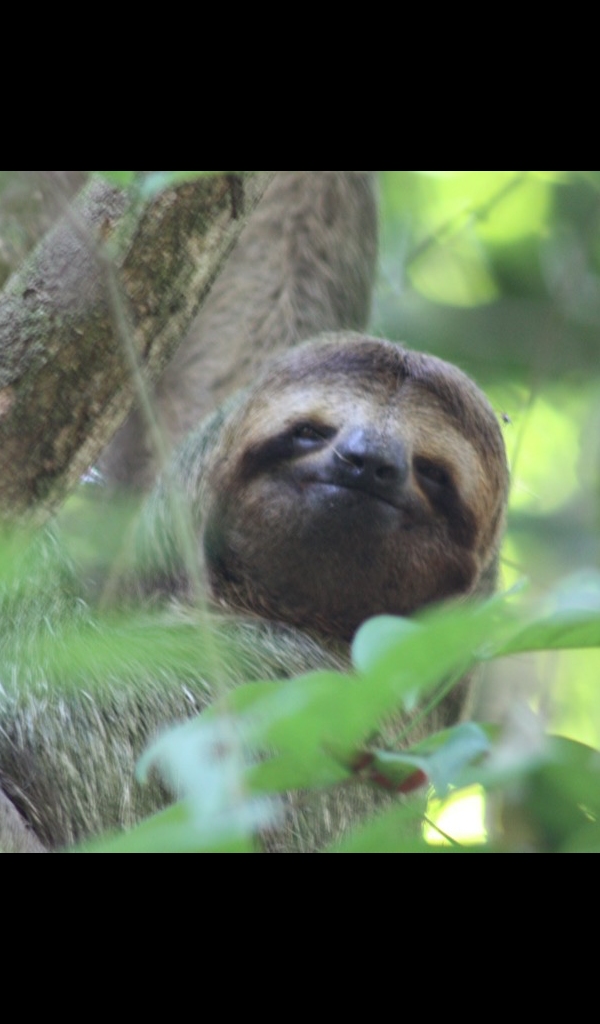 Amazon Com Cute Sloth Wallpaper Hd Wallpapers Of Cute