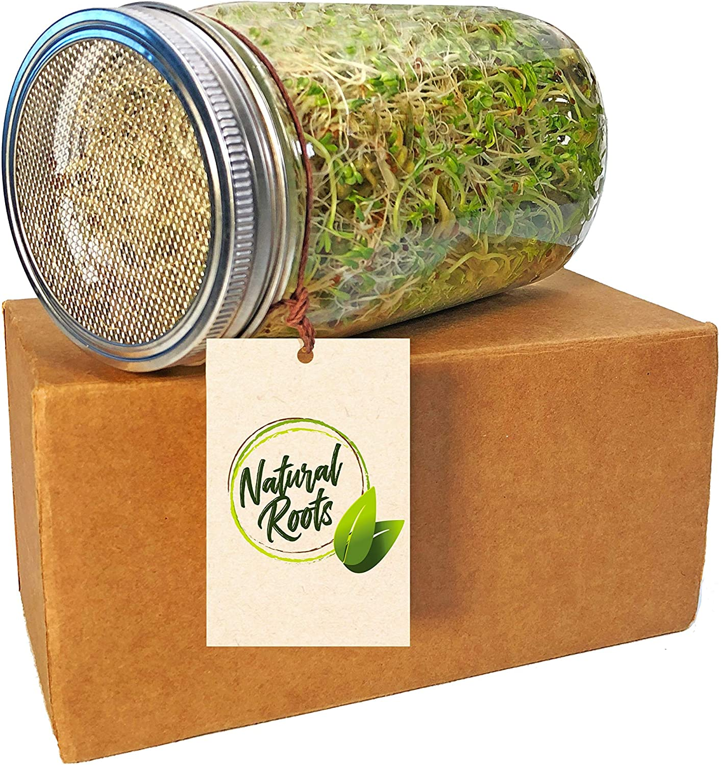 Natural roots sprouting jar