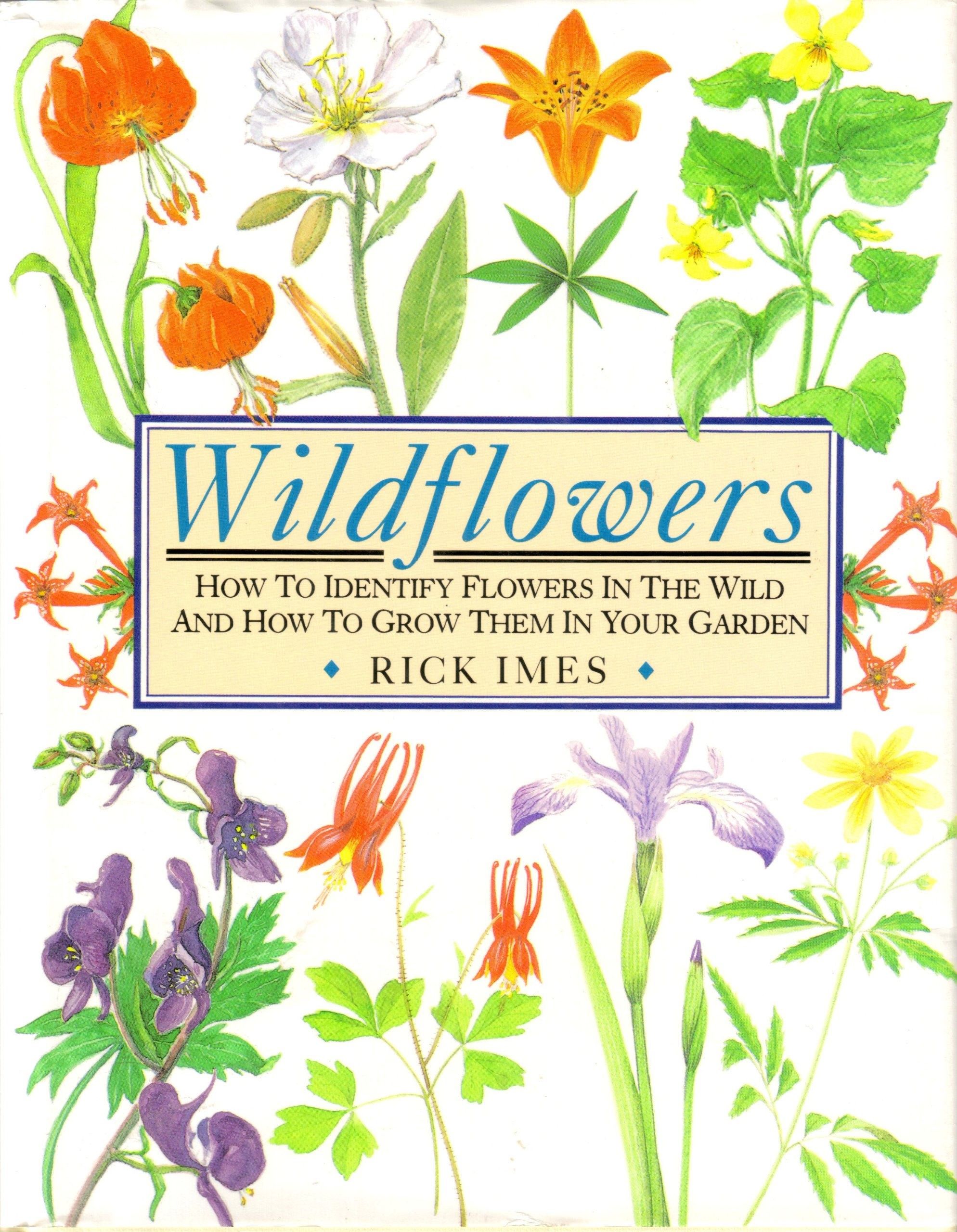 Wildflowers How To Identify Flowers In The Wild And How To Grow