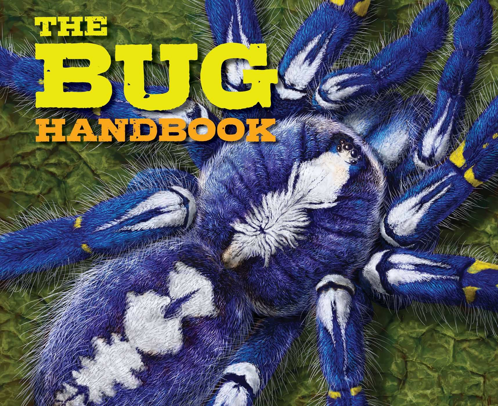 The Bug Handbook (Discovering) pdf