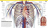 The Complete Human Body, 2nd Edition: The