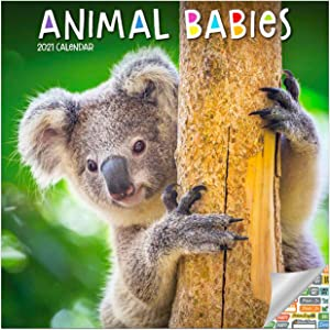 Animal Babies Calendar 2021 Bundle - Deluxe 2021 Baby Animals Wall Calendar with Over 100 Calendar Stickers