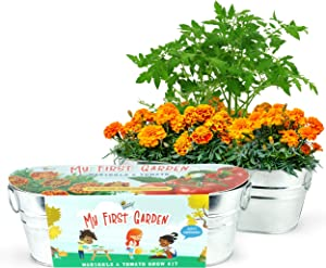 BUZZY Kids Windowsill Grow Kit   My First Garden: Tomato and Marigold   Best Gardening Gifts, Favors, Parties, Events, Unique, and Fun   Growth Guaranteed