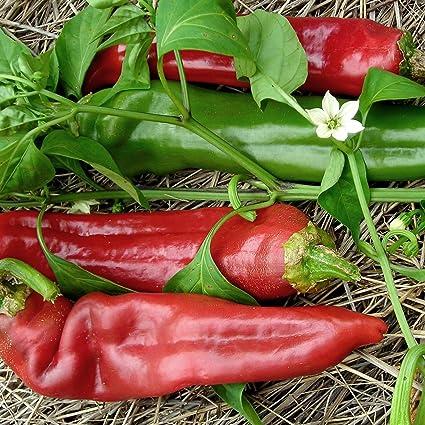 10 seeds Heirloom Vegetable Seeds! Sweet Cayenne Chili
