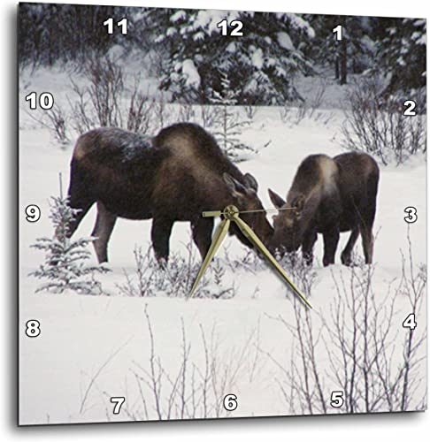 3dRose dpp_14600_3 Moose Cow and Calf Eating Winter Branches in The Snowy Field 1-Wall Clock, 15 by 15-Inch