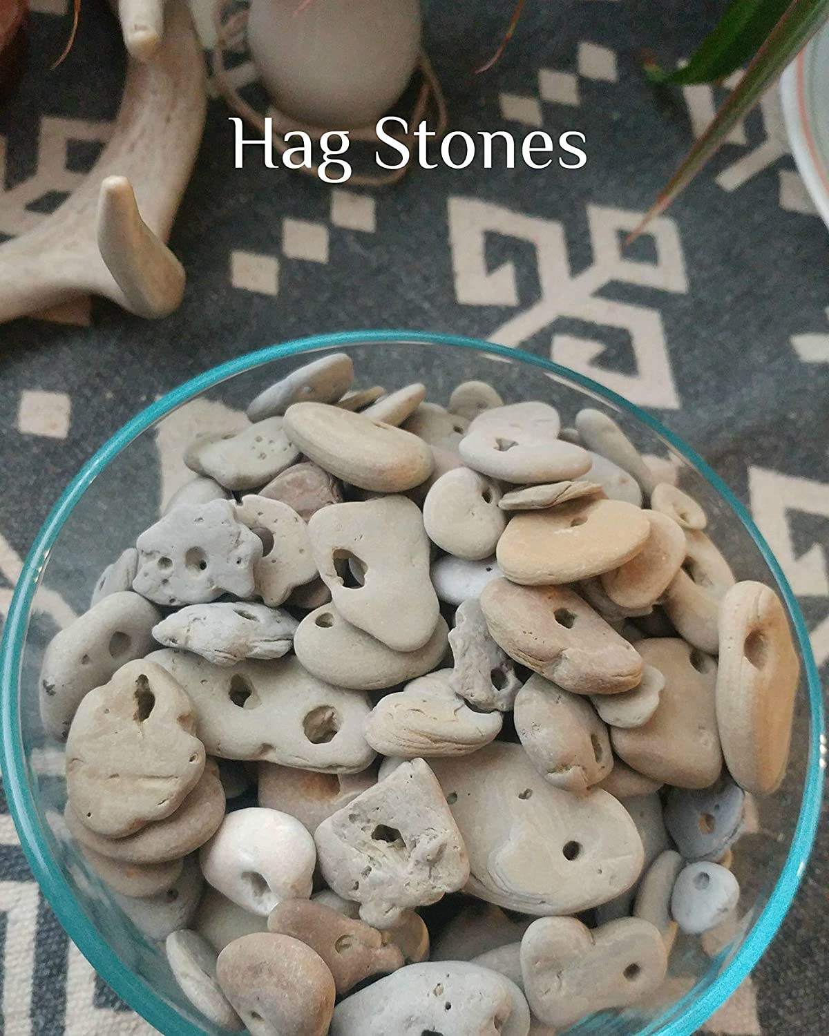 Hag Stone Fossils : We offers stone fossils products.