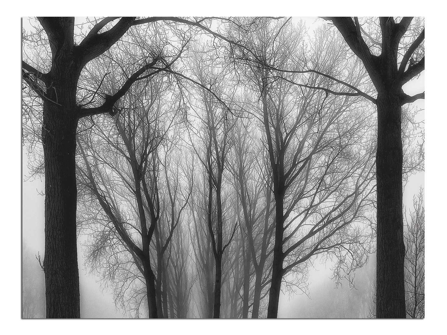 JP London Solvent Free Print PAPXS1X811951 Comes Winter Branches Forest Shadow Black White Ready to Frame Poster Wall Art 8 by 10