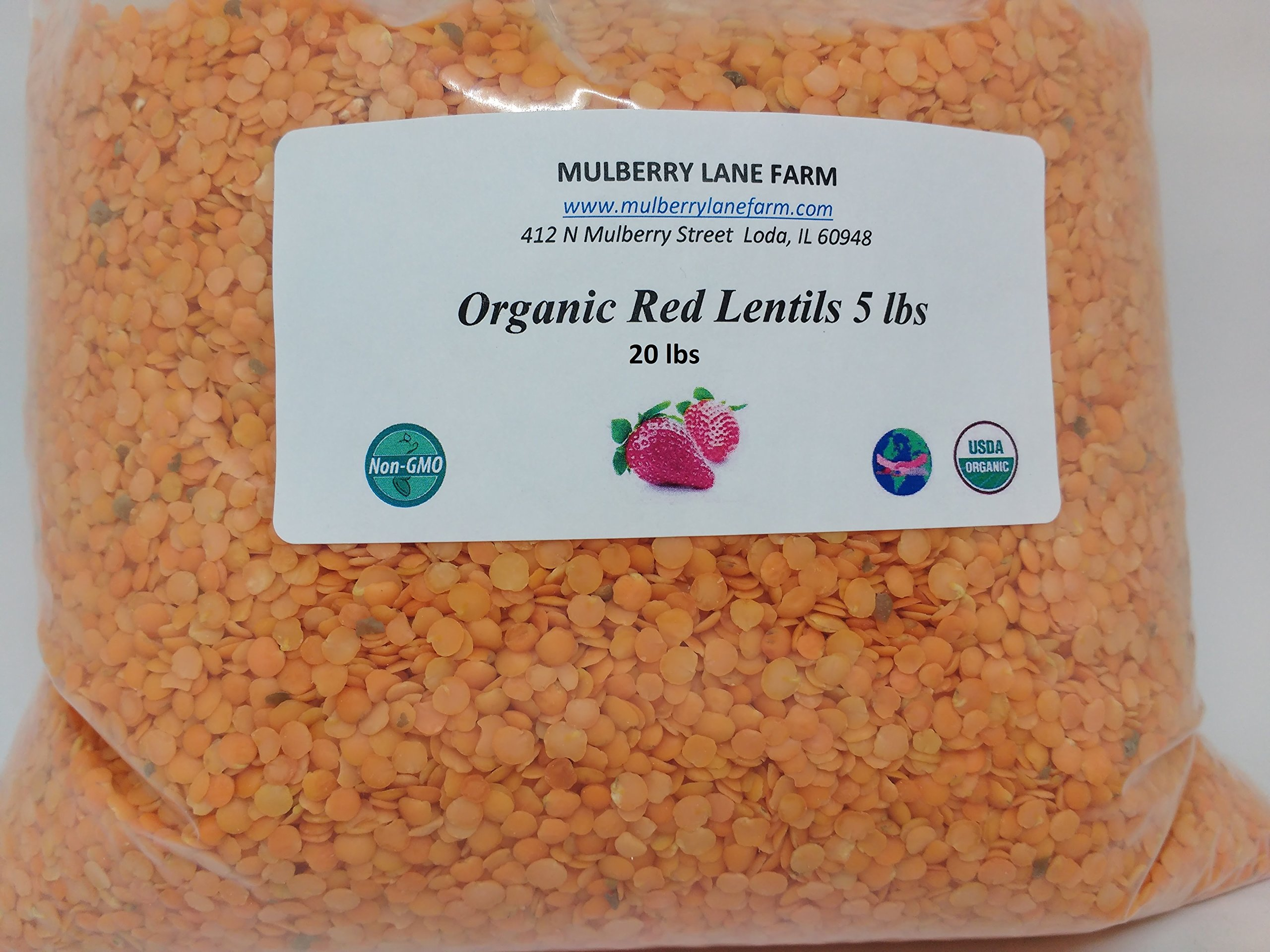 Red Lentils 20 lbs (twenty pounds) USDA Certified Organic, Non-GMO, BULK