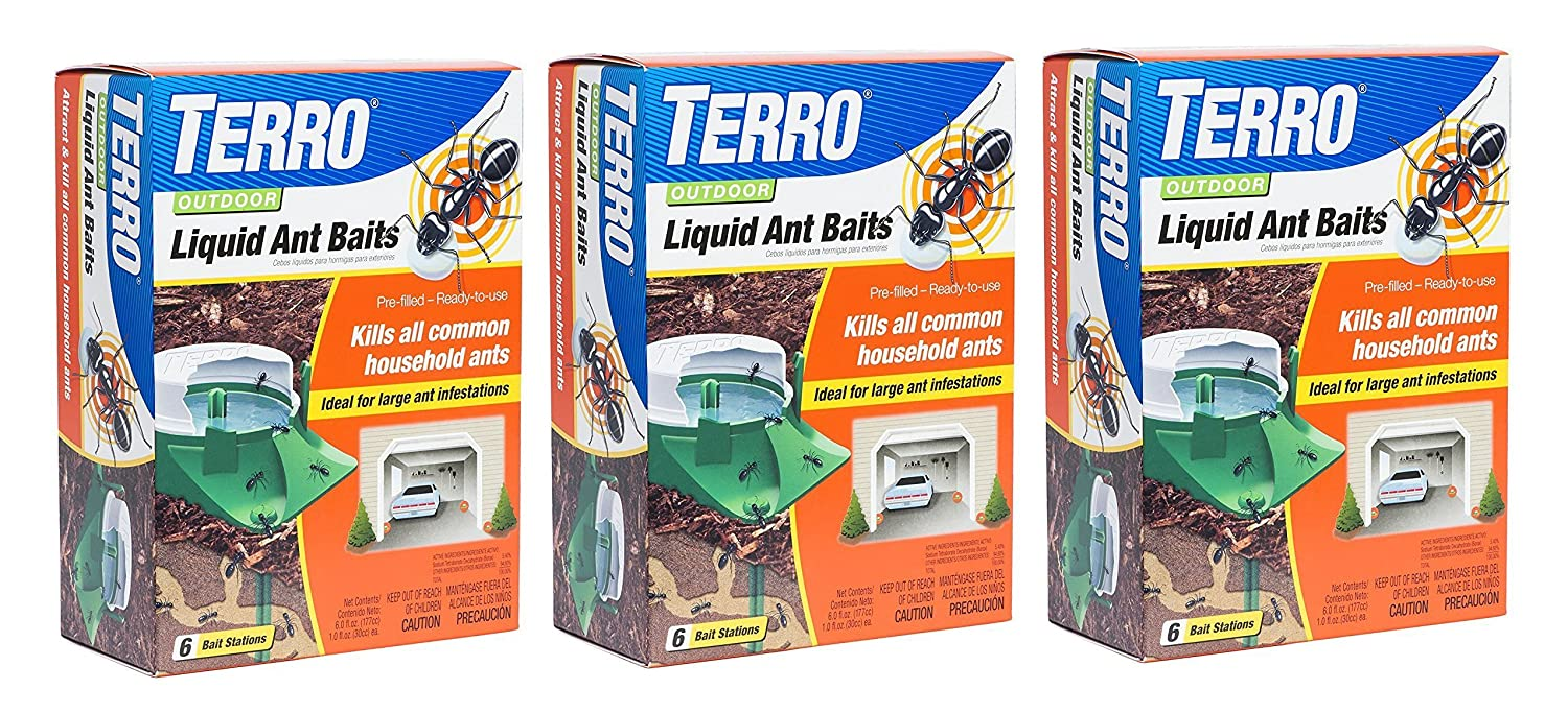 Best way to kill large black ants
