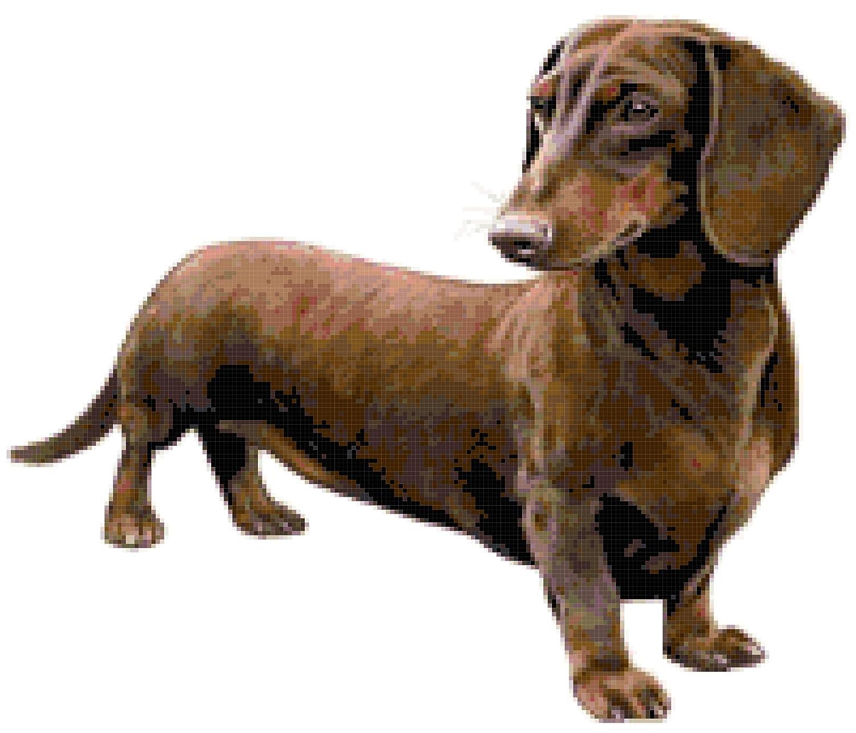 Dachshund Dog Counted Cross Stitch Pattern