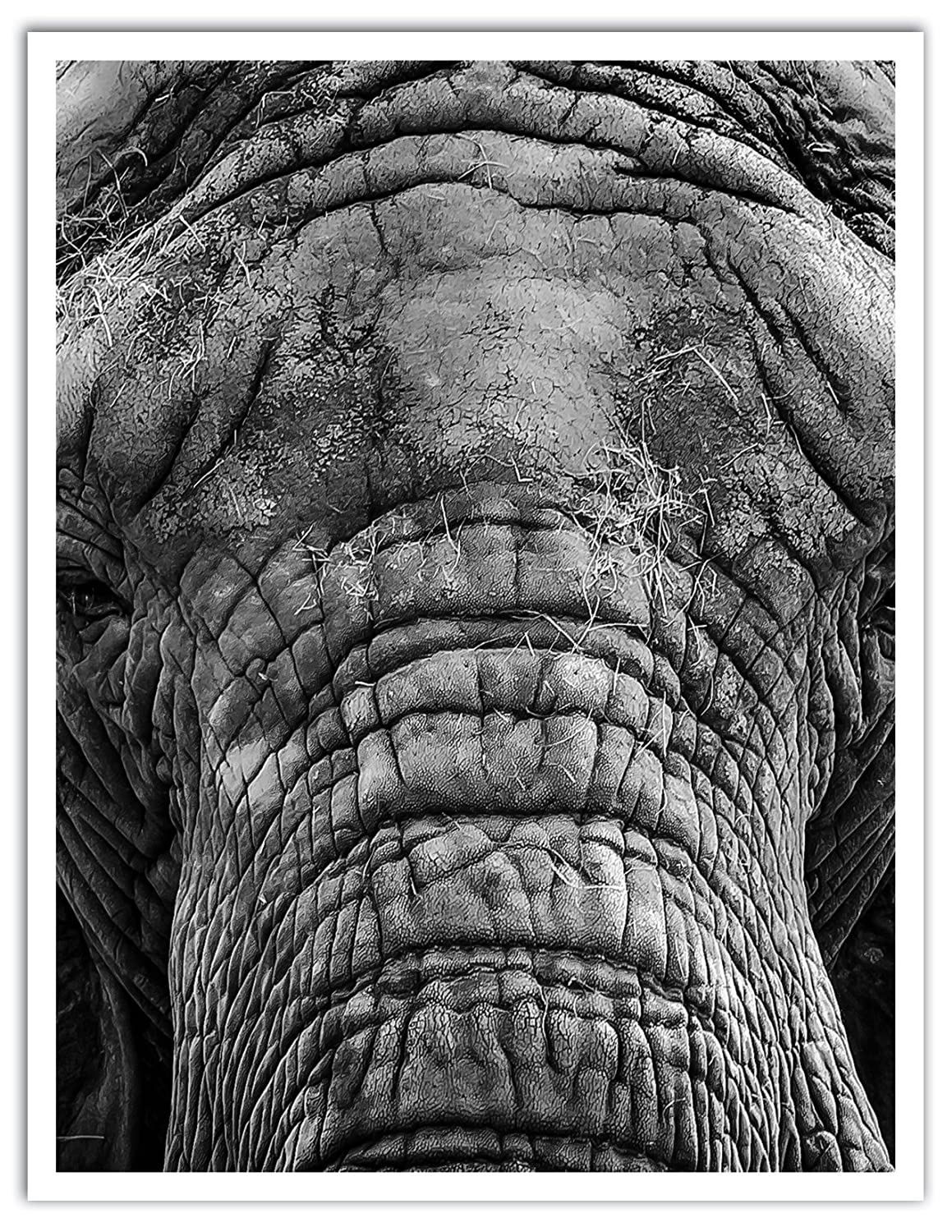 JP London POS1X50690 Jpl and Giovanni Casini Present 0|0 Wrinkle Trunk Grey Elephant Nature 25.75 by 19.75 Peel and Stick Fully Removable Wall Poster Mural
