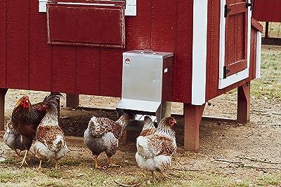 Chicken Feeder Rainproof Outdoor Metallic (50 LBS)
