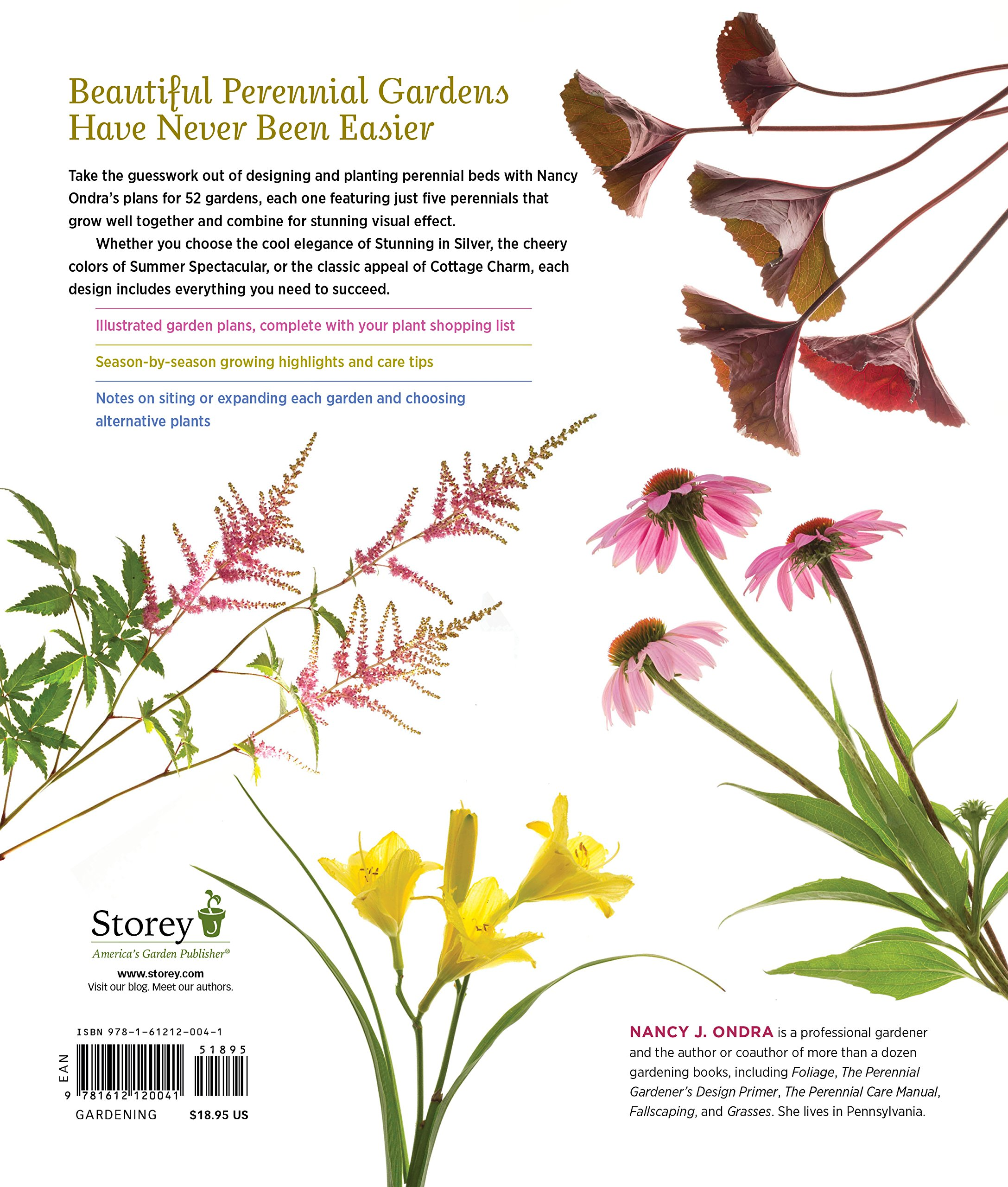 border beds ideas just of plans that perennial photo borders garden gardens and petunias sizzle flower pin a